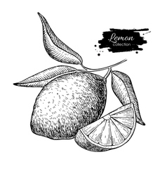 Hand drawn lemon or lime fruit with leaves vector