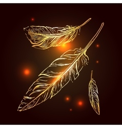 Hand drrawn feathers vector