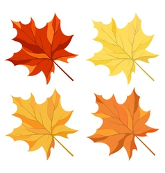 Maple leaves set vector image vector image