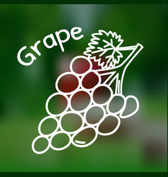 thin line grape icon vector image vector image