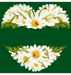 chamomile frame in the shape of heart vector image vector image