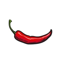 Hand drawn red hot chili pepper isolated on white vector image