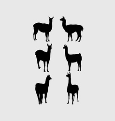 Lama silhouettes vector