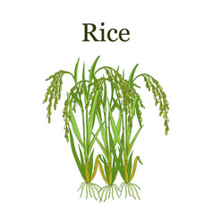 Rice plant vector