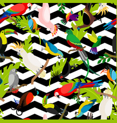 fashion parrots seamless pattern vector image