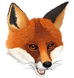 A fox vector