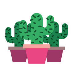 Three potted cactus plant natural vector