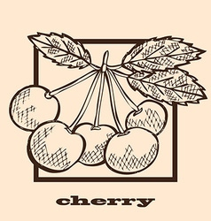 Hand drawn cherries vector