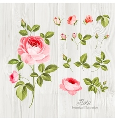 Wedding flowers bundle vector
