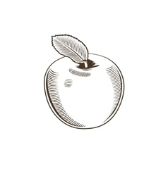 Apple in vintage style line art vector