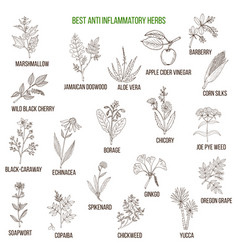 Best anti-inflammatory herbs vector