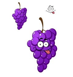 Happy funny bunch of fresh purple grapes vector image vector image