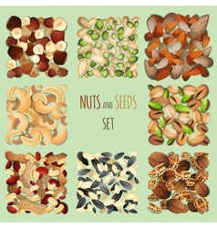 Nuts and seeds set vector image