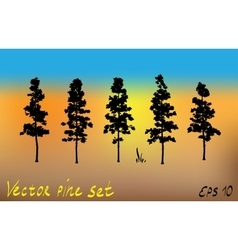 Pacific northwest pine old growth evergreen tree vector