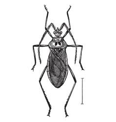 Assassin bug vintage vector