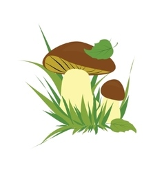 Boletus on a white background vector image