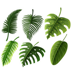 Different kinds of leaves vector