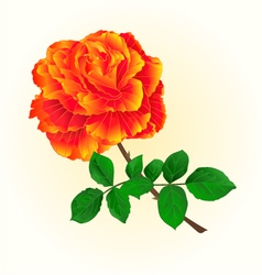 Rose orange isolated flower vintage vector