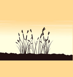 beauty scenery with course grass silhouettes vector image