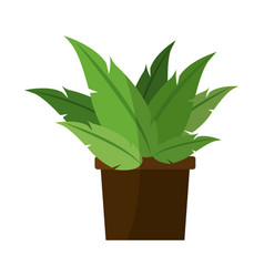 Green plant in a pot vector