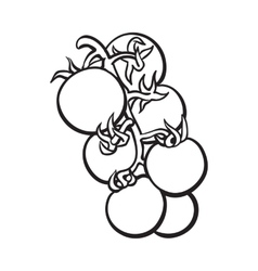 Sketch style drawing of shiny ripe cherry tomatoes vector
