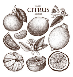 Ink hand drawn citrus plants sketch vector