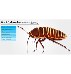 Giant cockroach - anamesia vector