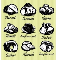Set symbols patterns of different seeds nuts vector