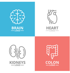 set of brain and heart kidney colon logo or vector image