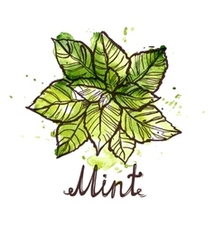 Sketch mint leaf vector