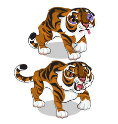 Aggressive tiger and tiger with a bruise vector