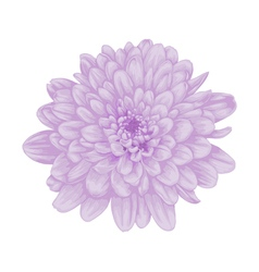 beautiful purple dahlia with the effect watercolor vector image vector image