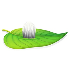 Monarch butterfly - danaus plexippus - egg stage vector