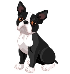 Sad boston terrier vector