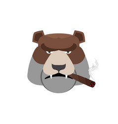Angry bear with cigar aggressive grizzly isolated vector