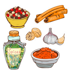 Spices seasoning hand drawn style food herbs vector
