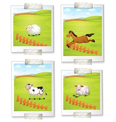 Four photos of animals vector image