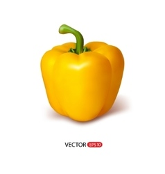 Isolated realistic paprika vector image