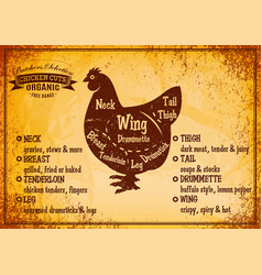 color poster with detailed diagram cutting chicken vector image
