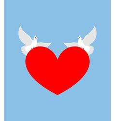 White dove holds heart two white bird is symbol of vector