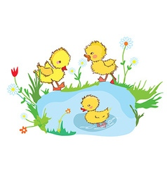 Funny ducks in the pond and flowers vector