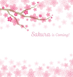 Cherry Blossoms or Sakura flowers Background vector image vector image