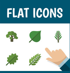 Flat icon nature set of tree leaves alder and vector