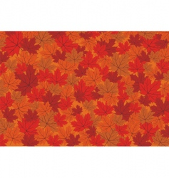 red maple autumn leaves background vector image vector image