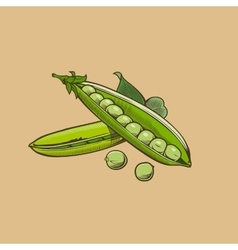 Green pea in vintage style Colored vector image