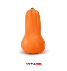 realistic pumpkin vector image