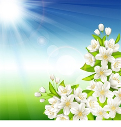 Flowering cherry vector image vector image
