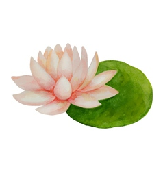 Watercolor pink lotus flower vector