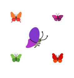 Flat butterfly set of milkweed monarch summer vector