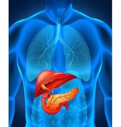 Pancreas cancer in human body vector